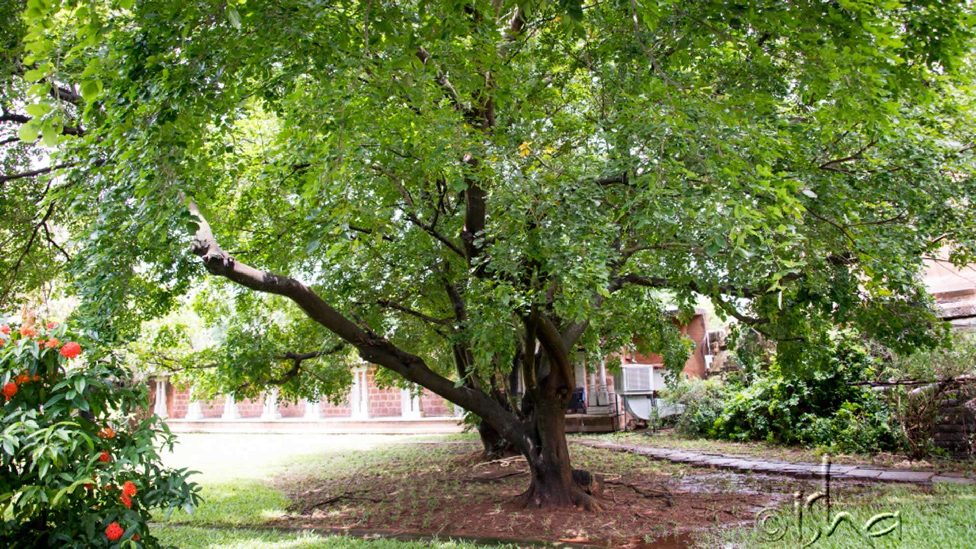 Can Trees Support In Creating A Meditative Space